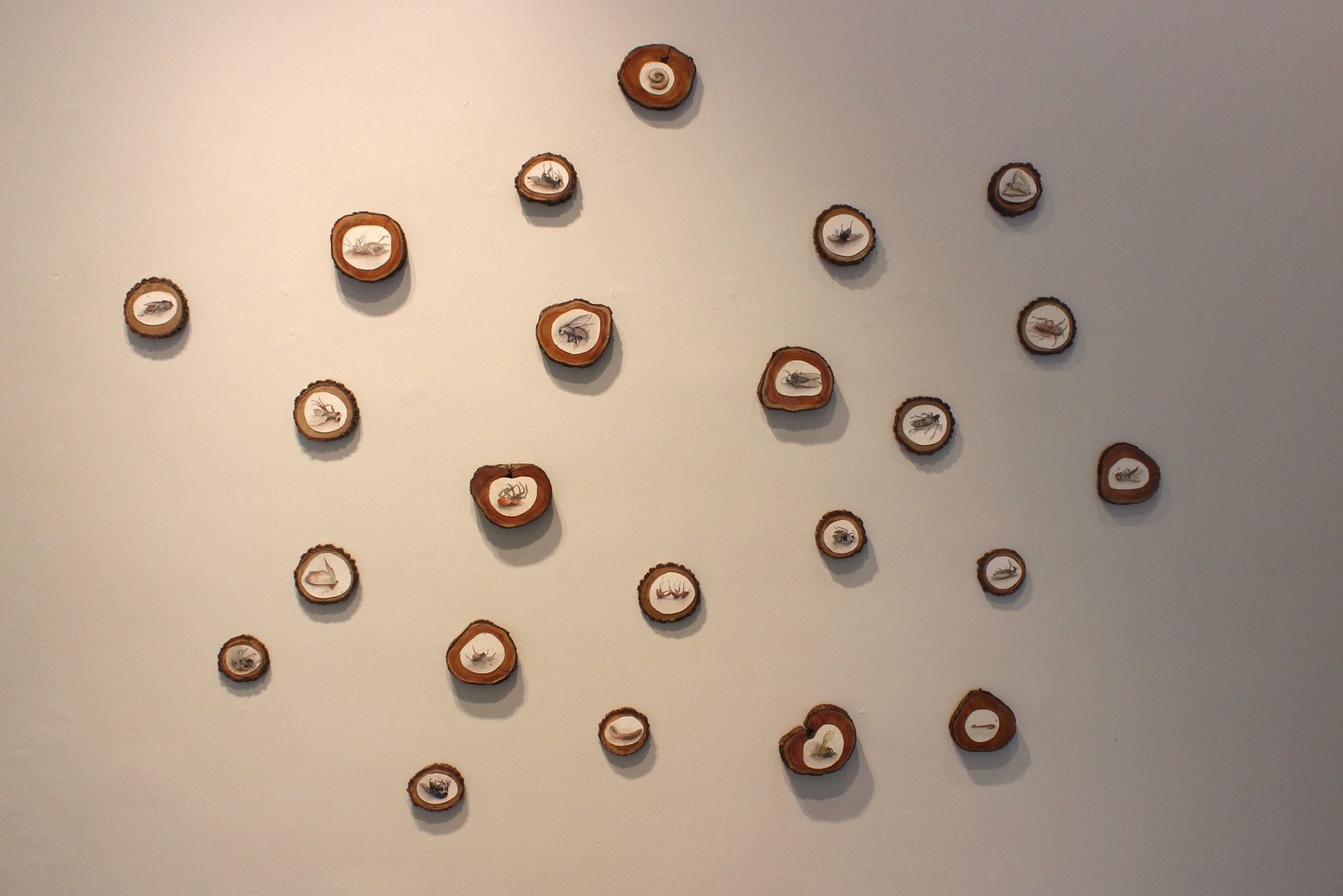 Kathleen Brehmer - Senior Exhibition